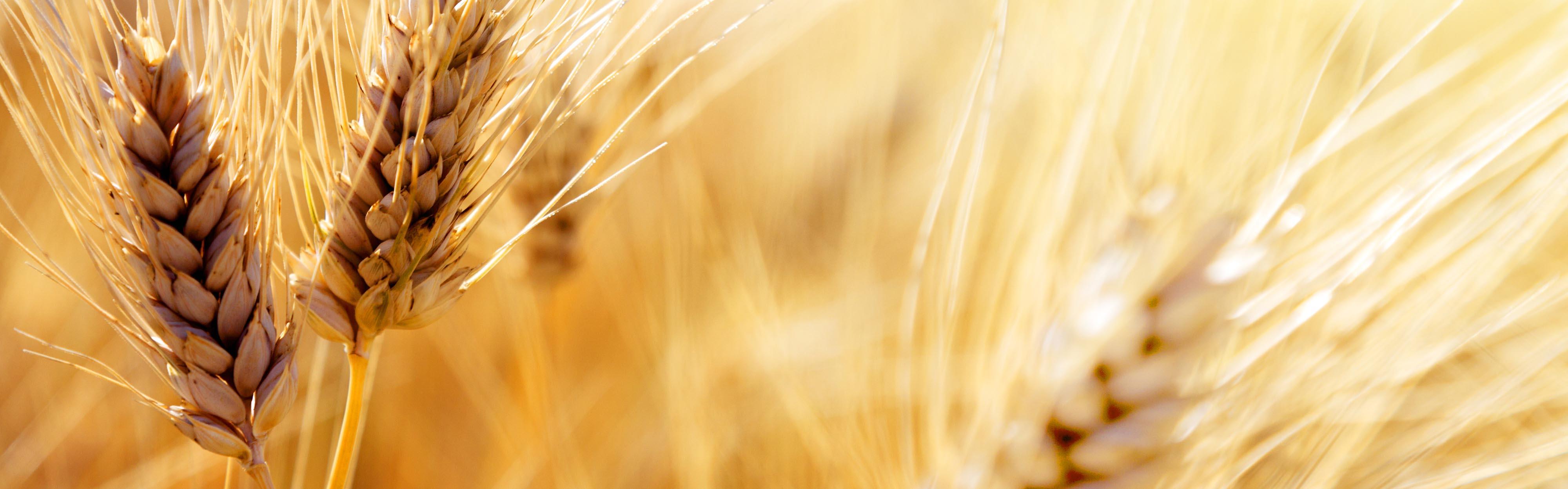 Il meglio del sole, del grano, della terra.
